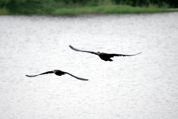鸕鶿鳥攝影組-佳作