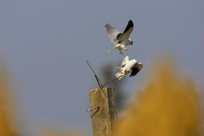 觀鳥攝影組-金牌獎