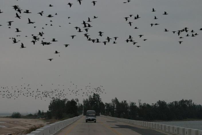 觀鳥攝影組-佳作獎