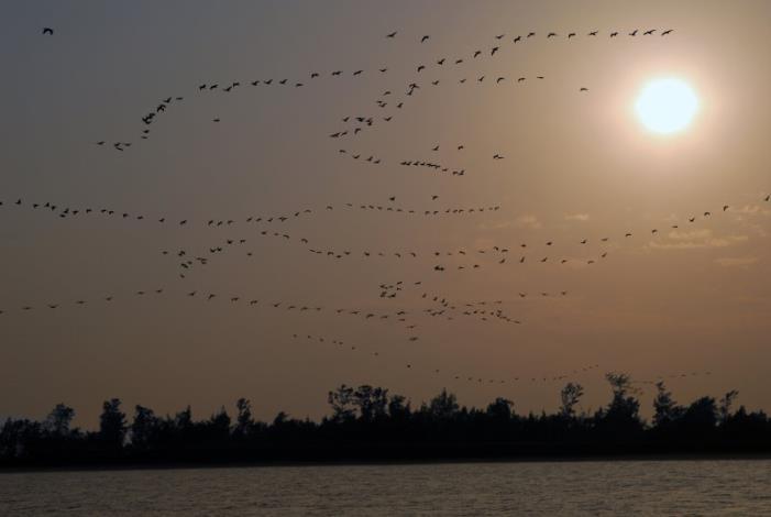 鸕鶿鳥攝影組-銅牌獎