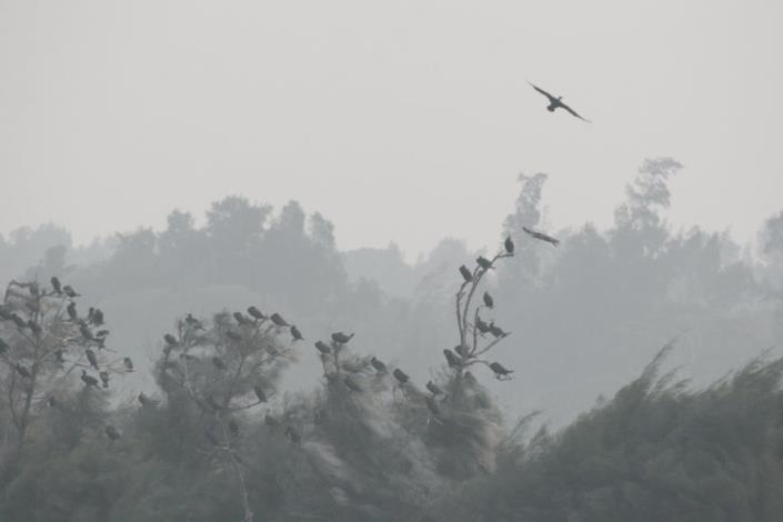 鸕鶿鳥攝影組-金牌獎