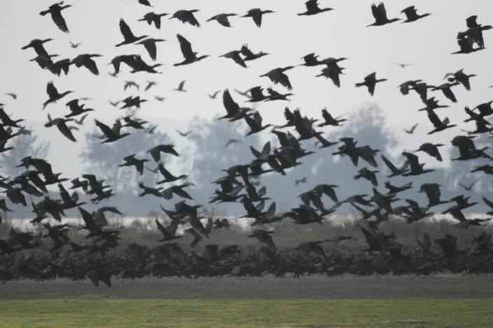 鸕鶿鳥攝影組-優作