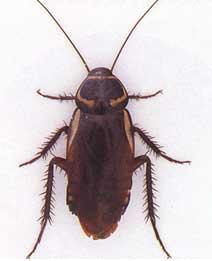 衛生局-蟑螂之照片