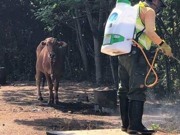 1090804 牛結節疹畜牧場環境消毒作業