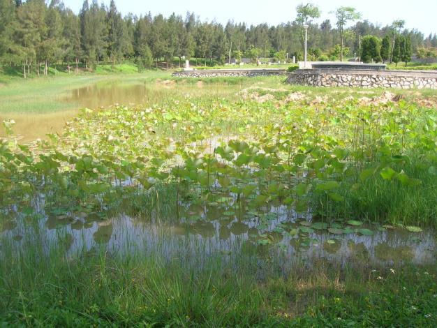 秋冬季請到池塘邊賞荷花,含苞待放,是很好去處。