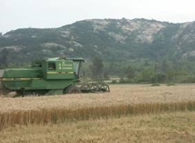 農試所-小麥契作採收照片