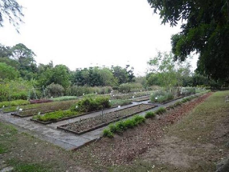 農試所-保健植物園