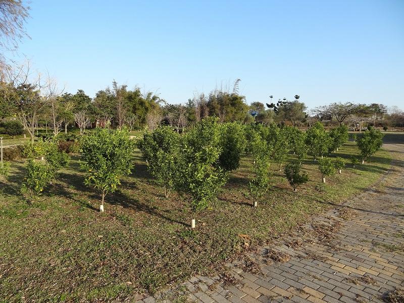 農試所-金棗栽培試驗區
