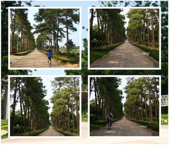 林務所溼地松林道