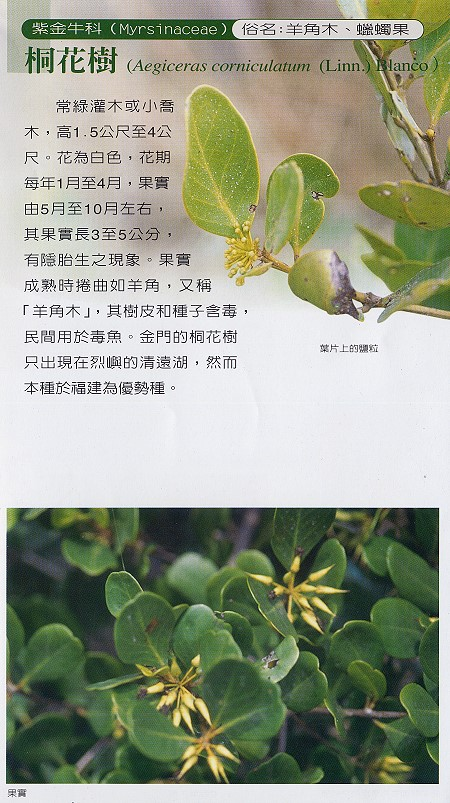 林務所-桐花樹照片