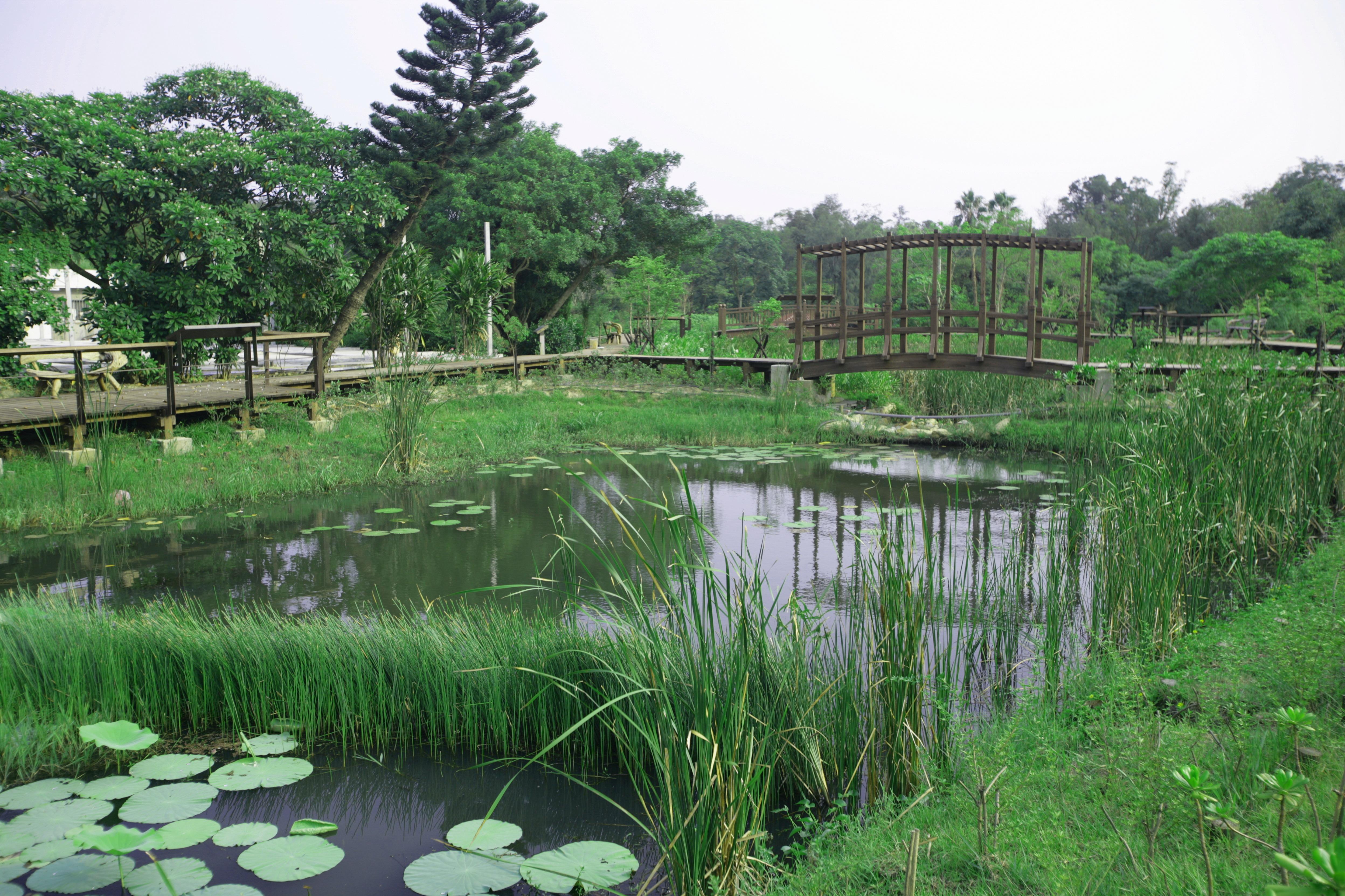 金門植物園生態池