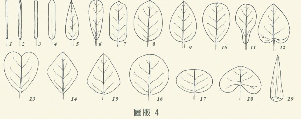 圖版4-葉的形態,編號1到19
