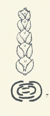 圖板1-葉序,編號7,散生葉叢生葉均屬互生者