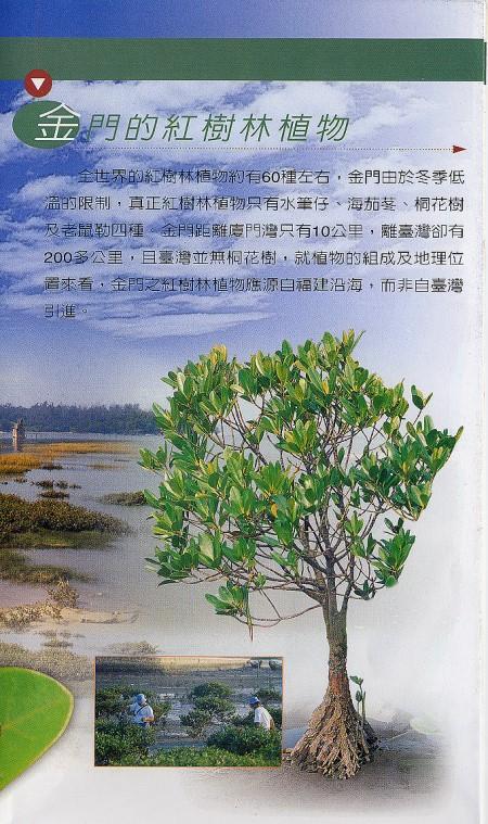 林務所-金門的紅樹林植物照片