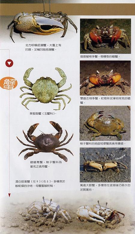 林務所-蟹照片