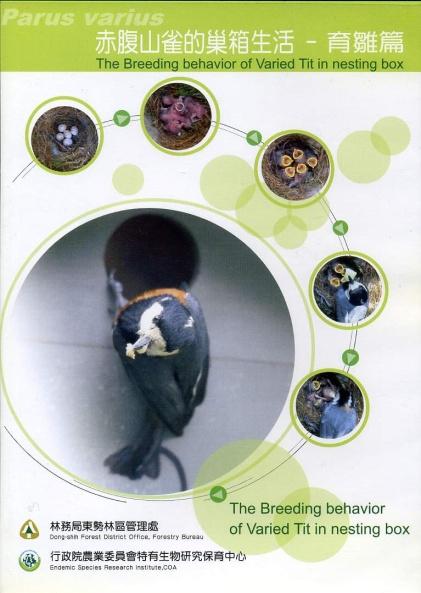 赤腹山雀的巢箱生活-育雛篇