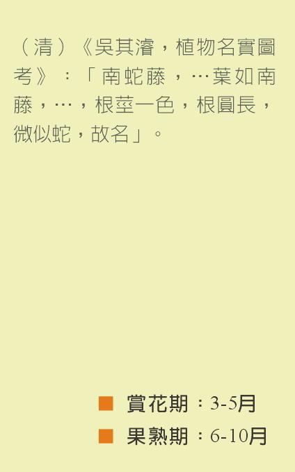南蛇藤-文