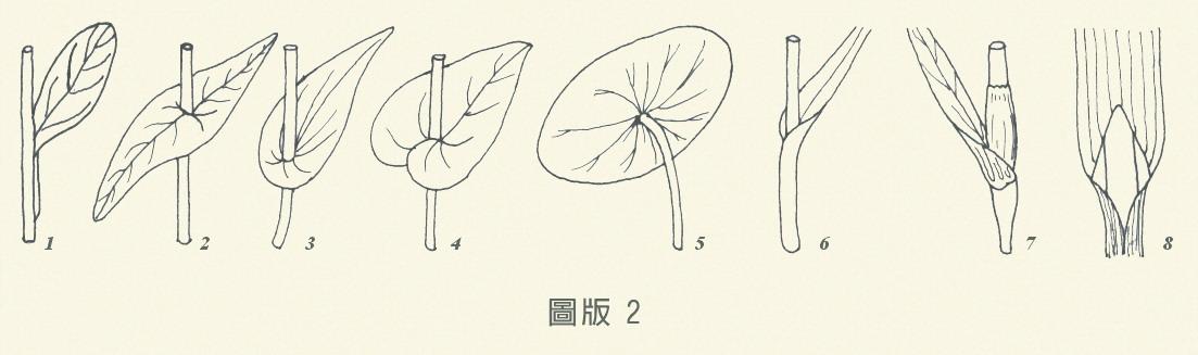 圖板2-尋常葉,編號1到8