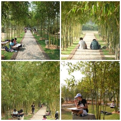 竹類標本園