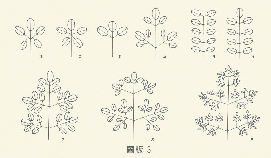 圖板3-單葉和複葉,編號1到9