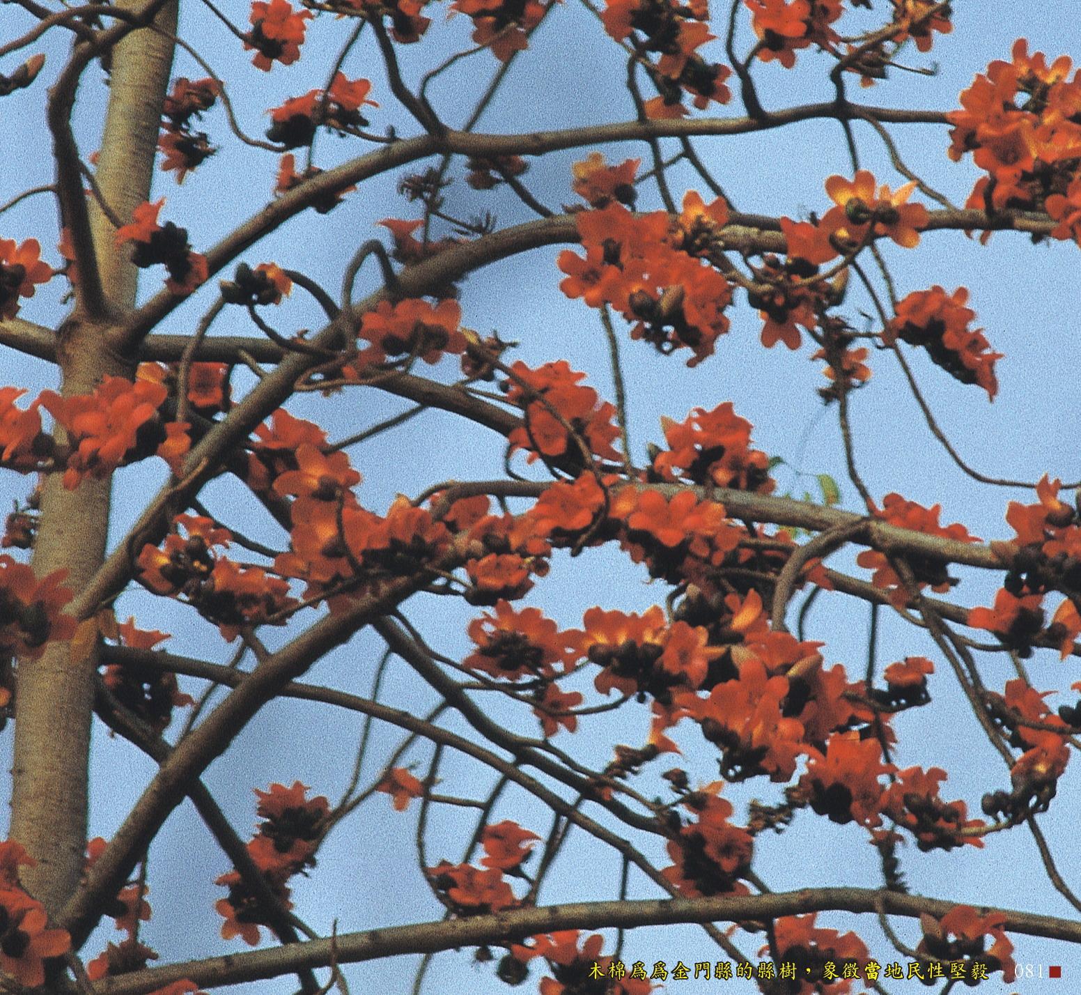 木棉為金門縣的縣樹,象徵當地民性堅毅