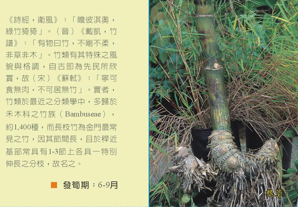 長枝竹-文.根莖