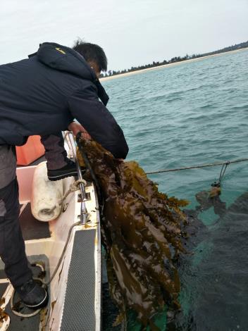 養殖戶海上採收