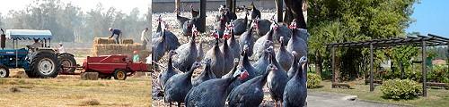 畜產試驗所-業務簡介之照片
