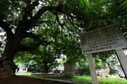 斗門古樹區