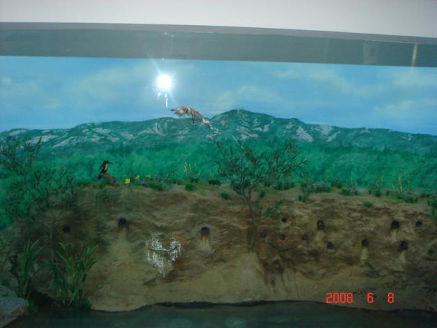 金寧鄉公所-國家公園雙鯉濕地自然中心館內之生態標本模型一.JPG