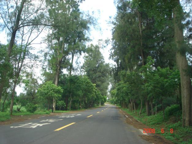 金寧鄉公所-慈湖旁優靜的林蔭道路.JPG