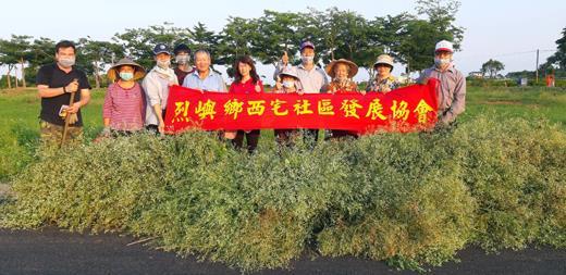 西宅社區發展協會理事長林世忠帶領居民拔除銀膠菊,降低毒草對社區的危害