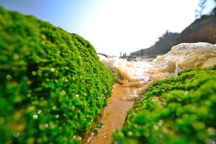 自然生態-許進西 (10)