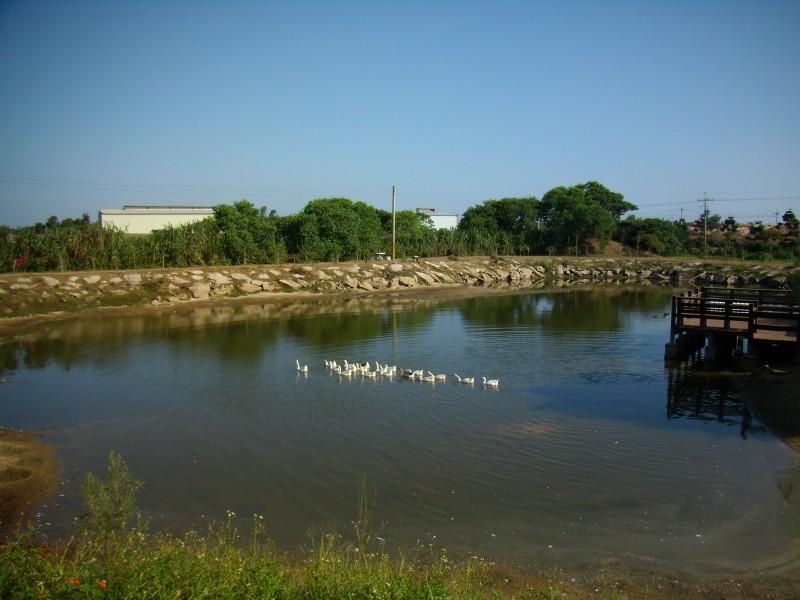 農試所-生態調節池照片