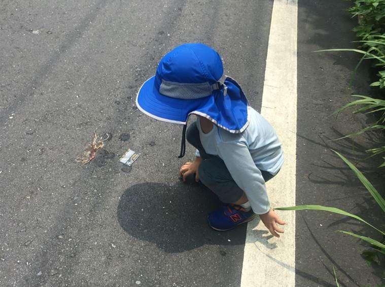小孩發現馬路上有被機車輾過的動物屍體。(照片/蔡若詩提供)